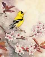 Spring Goldfinch by MistiqueStudio