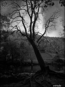 The Witches Tree by Estruda
