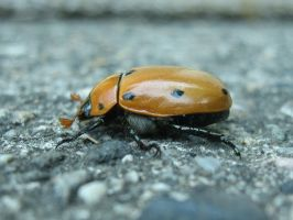 beetle by haley727