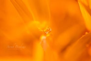Orange. by Blueberryblack