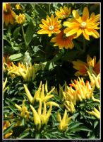 Peppers and Posies by TRE2Photo-n-Design