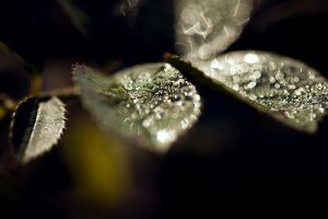 Morning Dew II by JoannaRzeznikowska