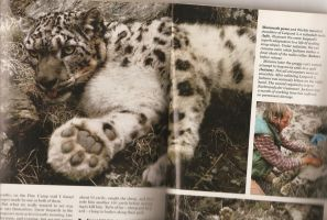 Snow Leopard - NatGeo Magazine - June 1986 by LeoSandra85
