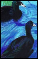 Black ducks by Charlene-Art