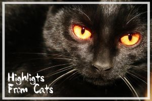 Highligts from cats by klamer4o