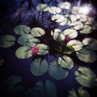 Holga Lotus by HolgaVision