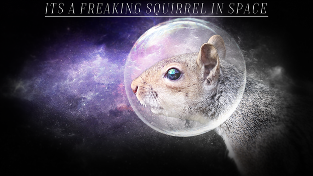 Squirrels In Space by BYU2101