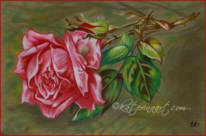 Mothers Day Rose by Katerina-Art