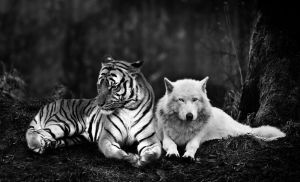 Tiger And Wolf by tyrondane