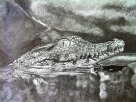 'Baby Crocodile' - 2013 - (Drawing) by Stevegillettart