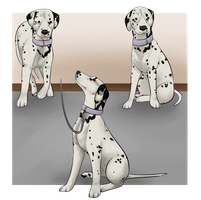 Puppy Training Program - Marilyn by Canidae-Mayhem