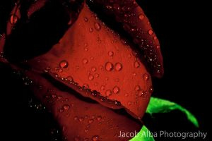 Deep Red 5 by JaSaAL