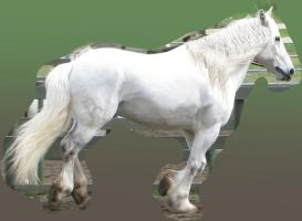 Cantering Draft Horse by Syeiraxx