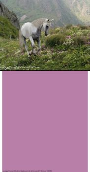 White Horse In Field Layout by LiveLoveLax21