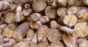 drying logs by warpig-stock