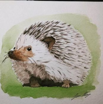 Hedgehog by lmoyer92