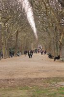 Avenue of trees by Bruce-Pictures