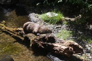 Otter by ArtistStock
