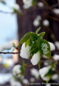 Leaves With Snow by coffeenoir