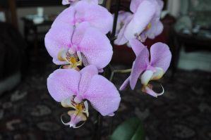 orchid 2 by density-stock