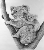 Koalas by Rens-Ink