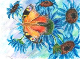 Butterfly on Blue Sunflower by Shirkee