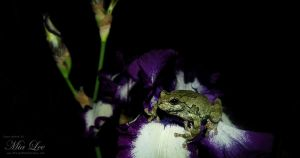 The Frog and The Flower 002 by MiaLeePhotography