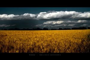 Rain on Wheat by Konijntje