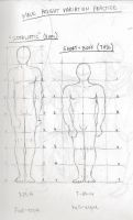 Male Proportions Sketch Practice by littlewaysoul