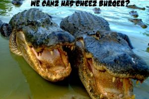 LOL GATORS 1 by SirPreacher