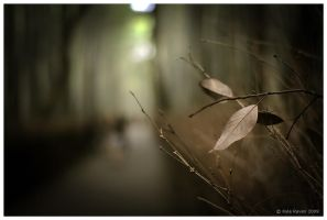 Sagano Forest by escape-is-at-hand
