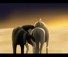 Aquainted at sunset |Breeding slot tryout. by jodifarrow22