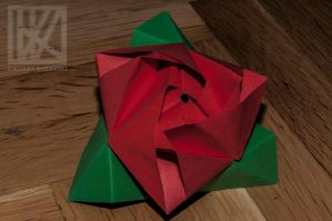 Paper Rose . . . ? by kaioian