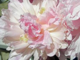 Peonies Stock 11 by Retoucher07030