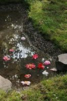 little pond with camellias by ingeline-art