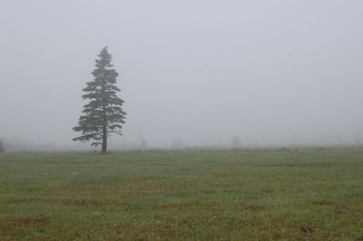 Foggy Day: Tree 1 by angelaiko
