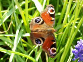 Papillon 2 by eco6org