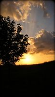 Silhouetted in the Sunset by tjsviews