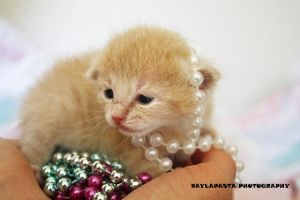 Beaded kittens by Baylapasta
