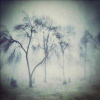 Willow Wisp by intao