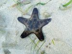cute starfish by sariahlds
