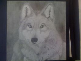 Wolf Drawing by XAC-Productions