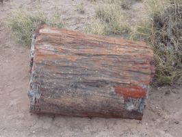 Trips to Petrified Forest NP 24 by Sting-raptor