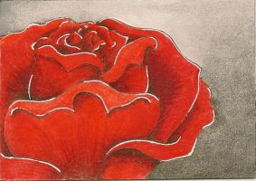 Not a simple rose by o0Luthien0o