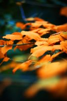 Autumn has come 8 by Dmitriyphoto