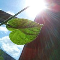 Green leaf and Sun by AnastasiyaKosenko