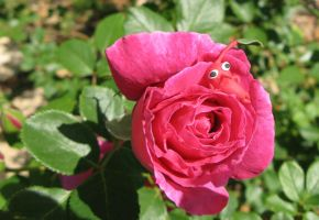 Red Pikmin on a Rose by Rutela