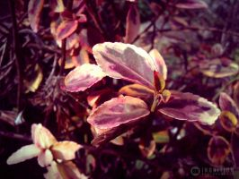 Photogallery 2014 - 02 red leaves by Ingnition