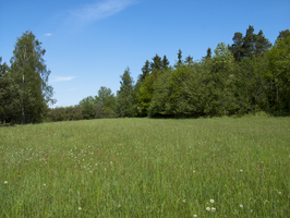 meadow2 by oosstock