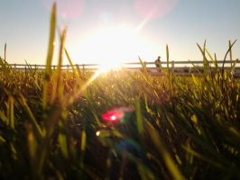 Sunny grass by LillyFruit